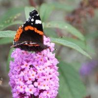vlinder bij bloem
