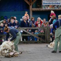 schapen scheren VictorioPictures (7)
