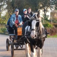 Dave en ponywagen