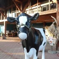 baukje de koe