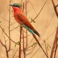 vogel namibie