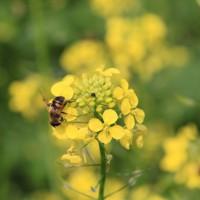 bijenconvenant