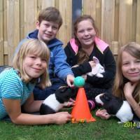 cursus konijn en knaag (1)