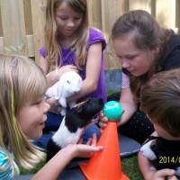 cursus konijn en knaag (3)
