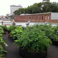 stadslandbouw daktuin