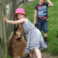 kinderboerderij (2)