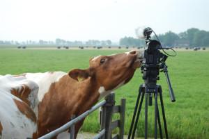 Bodemboeren afbeelding JPEG koe