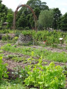 Permacultuurtuin-Bij-ecologisch-moestuinieren